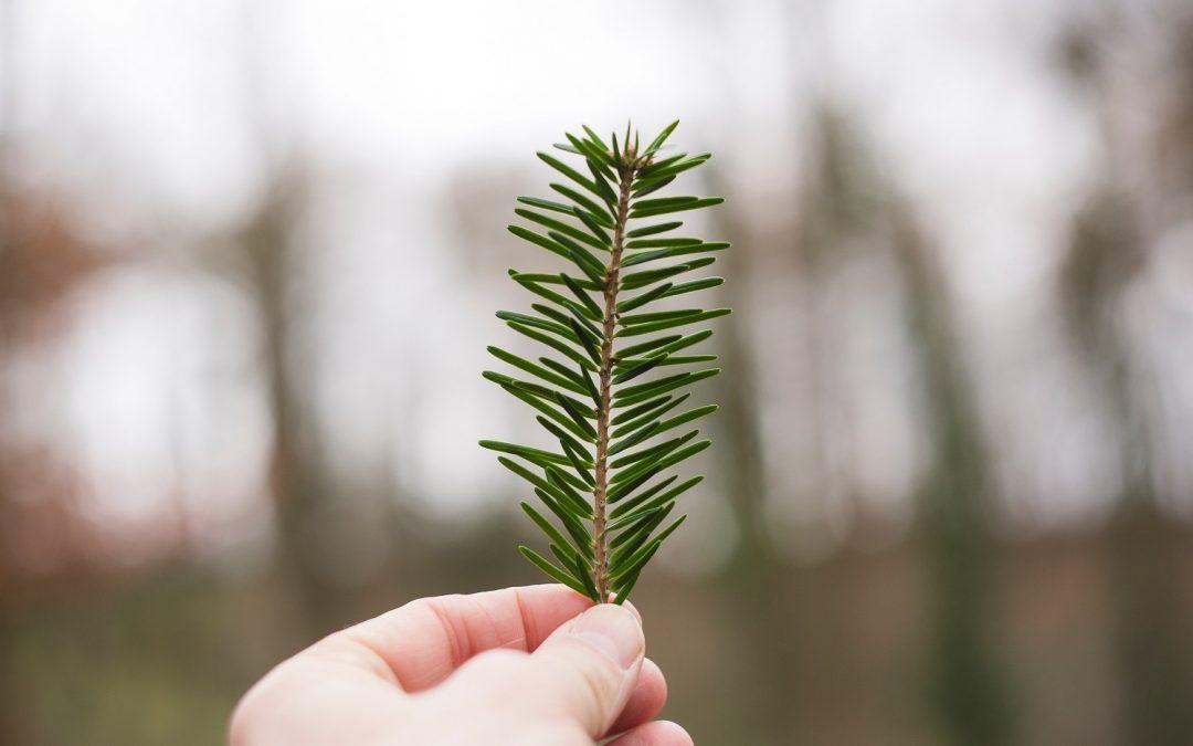 Por unas navidades más sostenibles